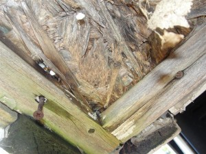 Severely-rotted-wood